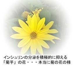 インシュリンの分泌を積極的に抑える「菊芋」の花