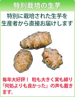 菊芋の生芋