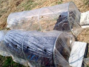 無農薬・有機栽培の菊芋はハウスで