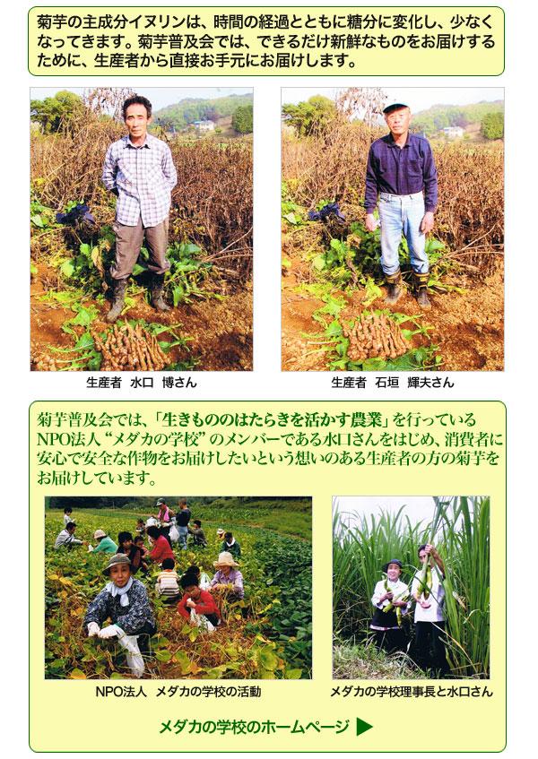 菊芋普及会の生菊芋